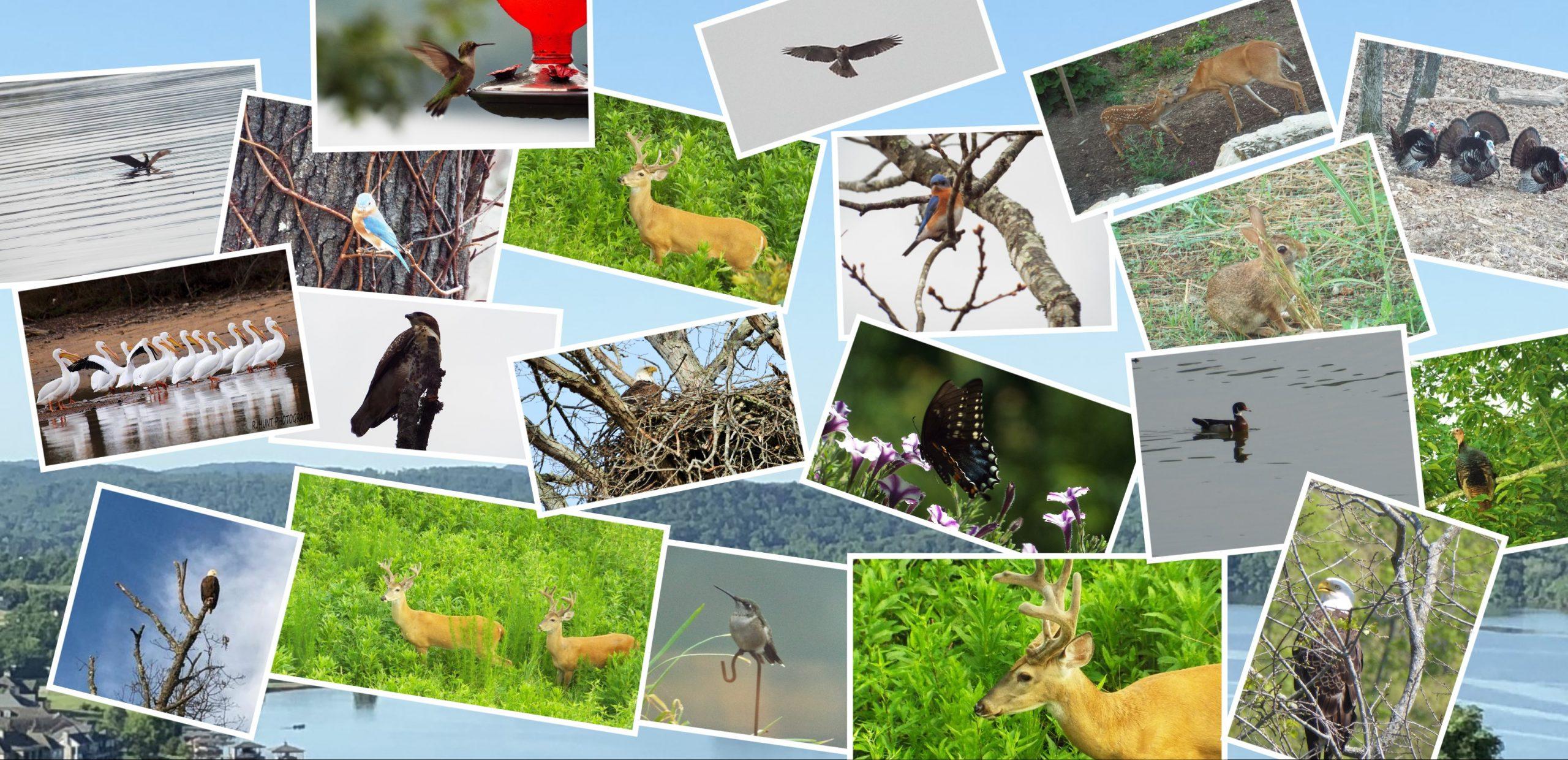 Nature collage at Grande Vista Bay